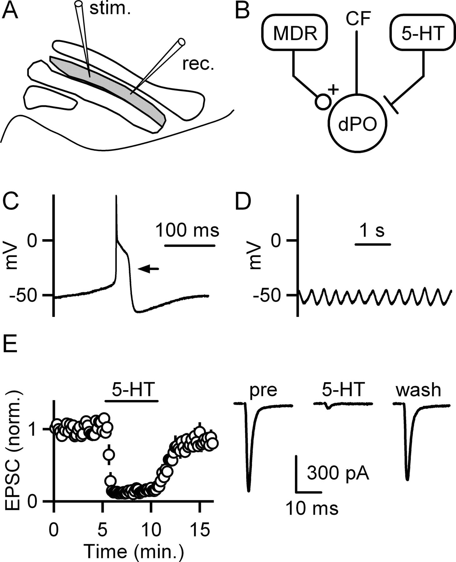Serotonin Evokes Endocannabinoid Release And Retrogradely Suppresses Ym 50 Wiring Schematic Download Figure