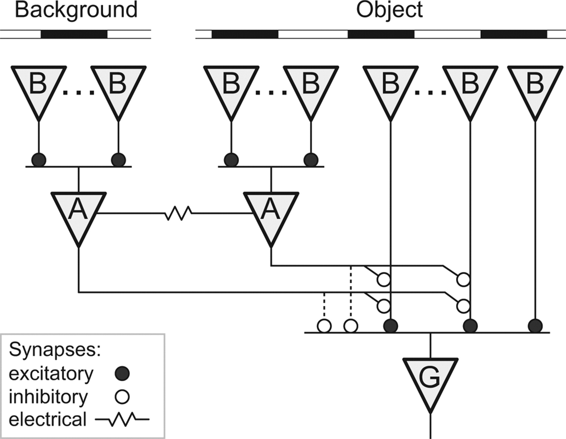 A Retinal Circuit That Computes Object Motion Journal Of Neuroscience Circuits To Your Students The Powerpoint Covers Simple Download Figure