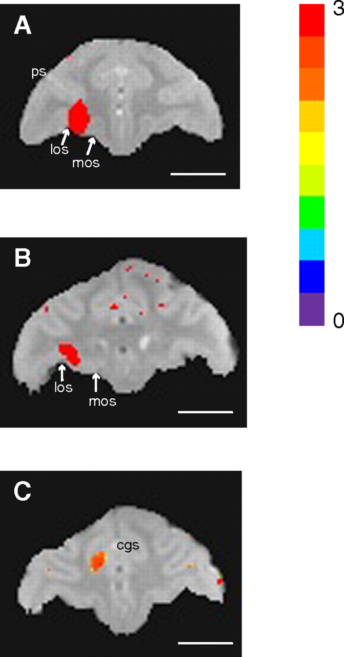 Mapping Prefrontal Circuits In Vivo With Manganese Enhanced Magnetic Alphabet Of Printed Circuit Boards Vector By Ivn Image 556991 Download Figure