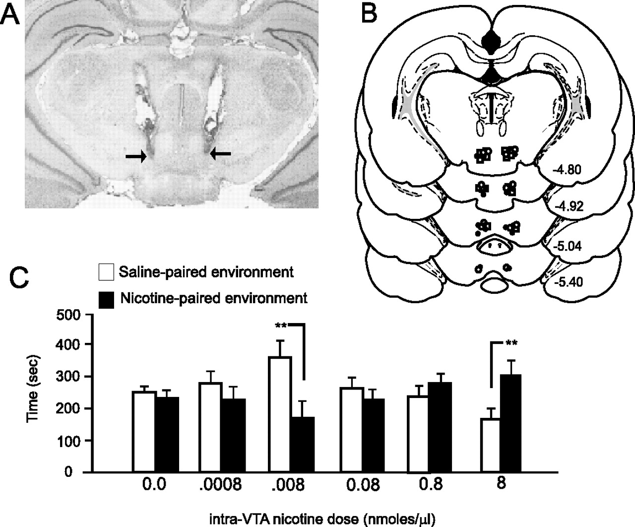 Dopamine signaling through d1 like versus d2 like receptors in the download figure pooptronica Choice Image