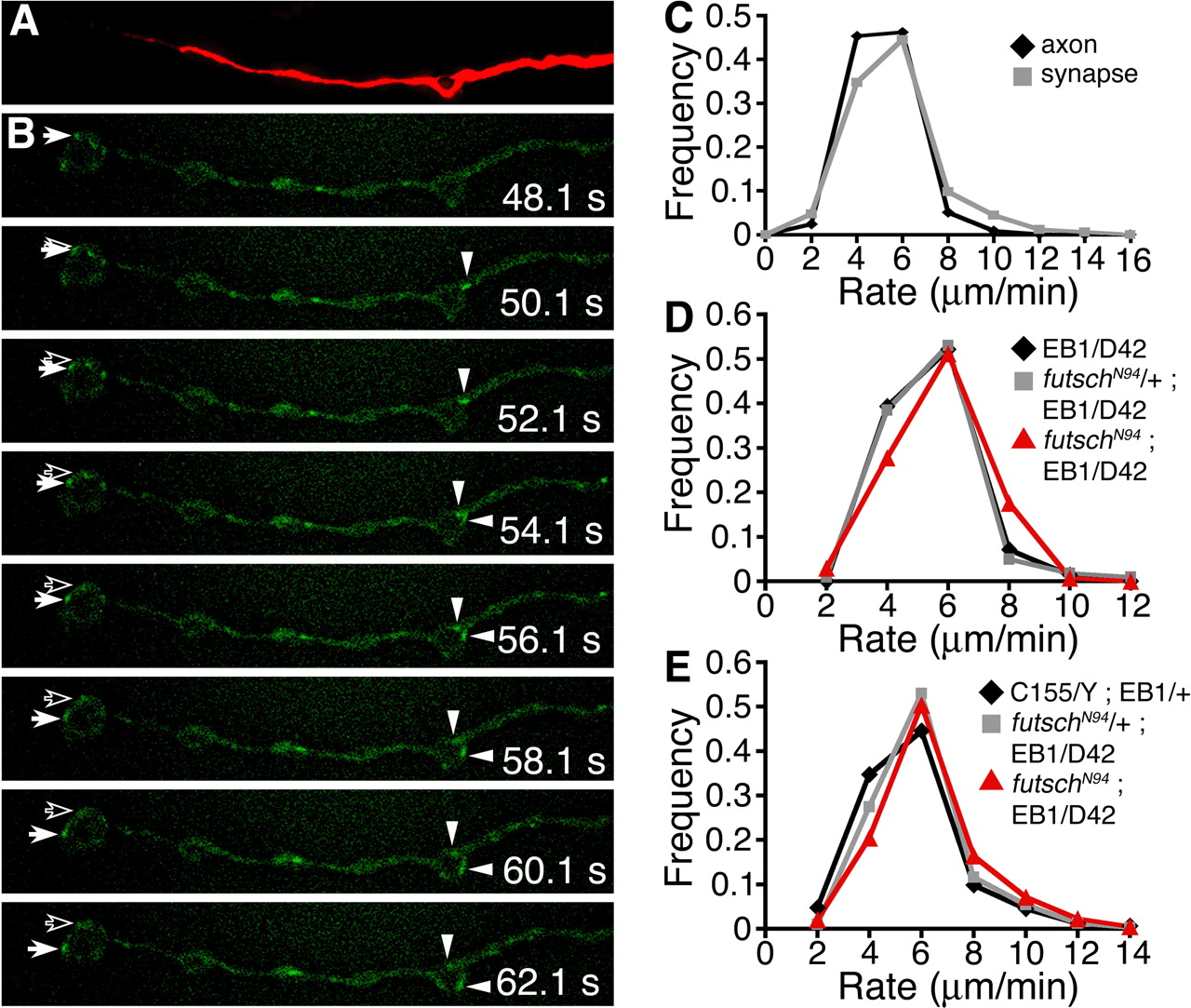 Formin-Dependent Synaptic Growth: Evidence That Dlar Signals