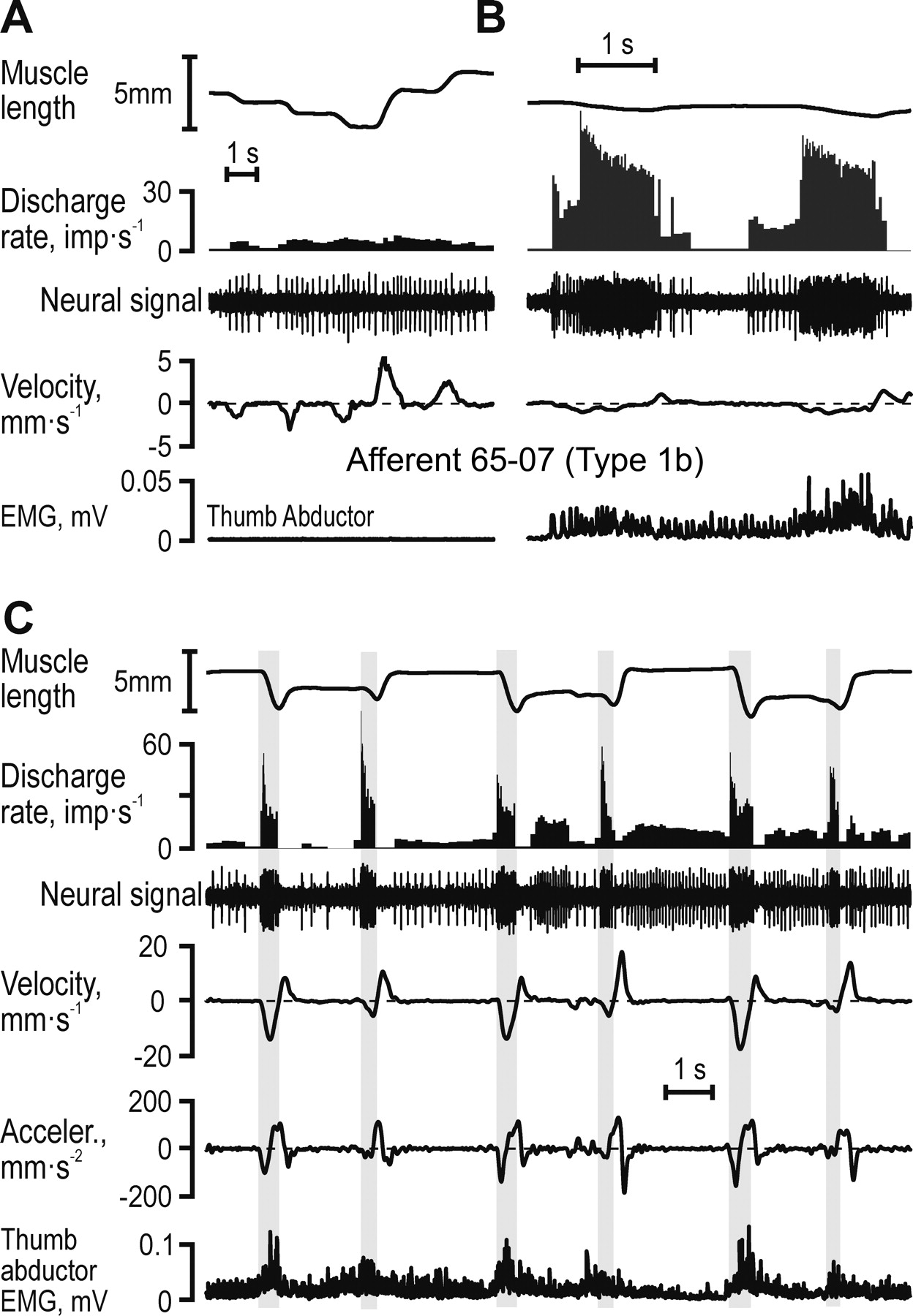 Discharges in Human Muscle Receptor Afferents during Block Grasping ...
