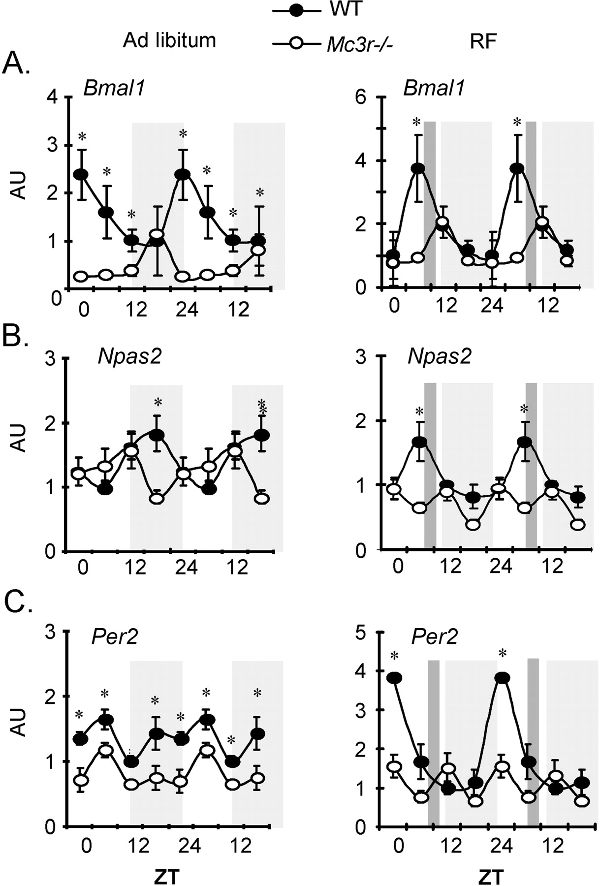 The Melanocortin-3 Receptor Is Required for Entrainment to Meal