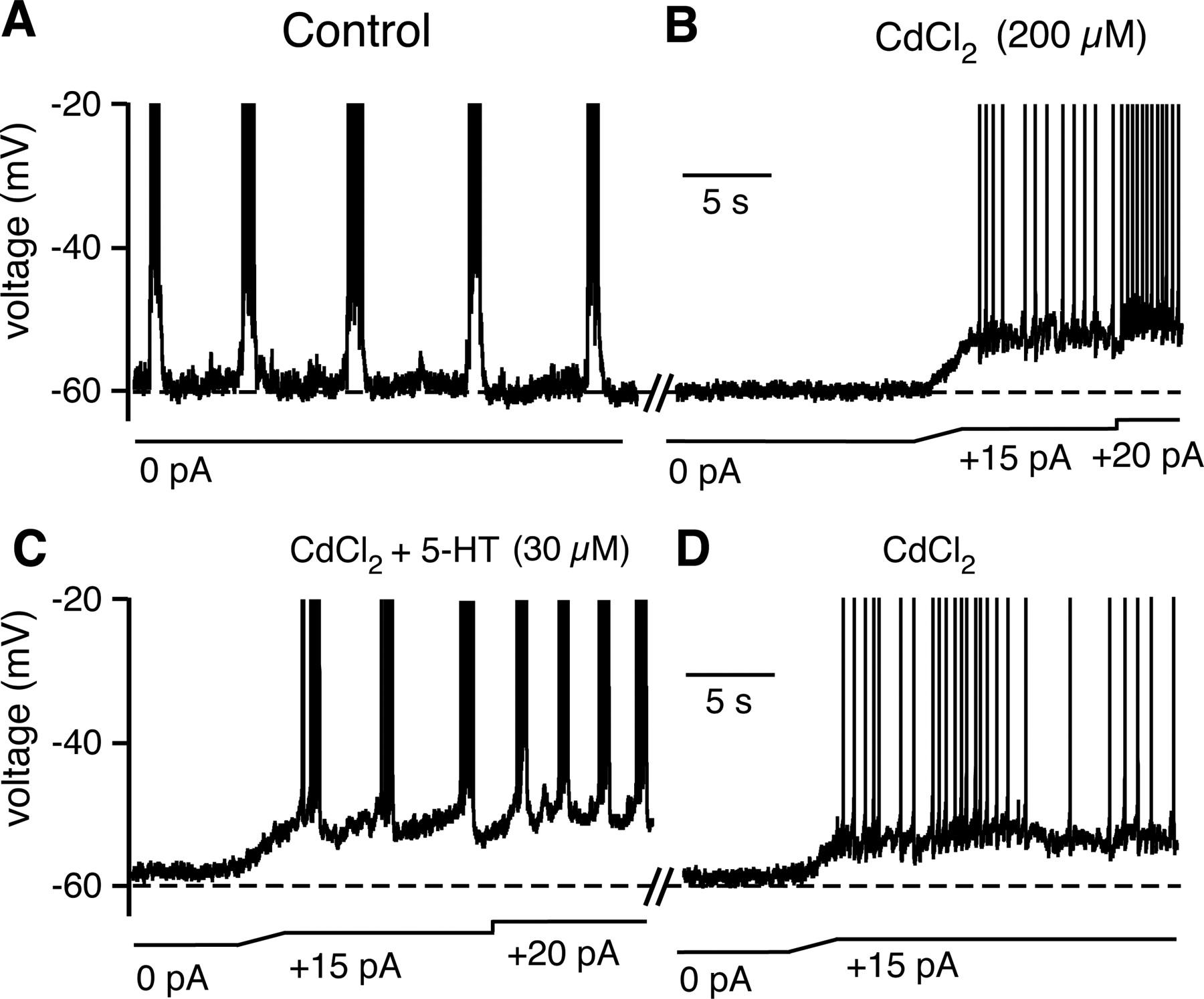 raph u00e9 neurons stimulate respiratory circuit activity by multiple mechanisms via endogenously