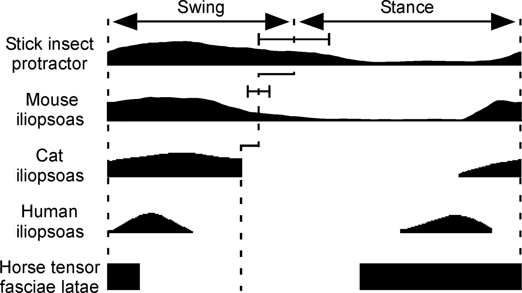Neural Control of Unloaded Leg Posture and of Leg Swing in Stick ...