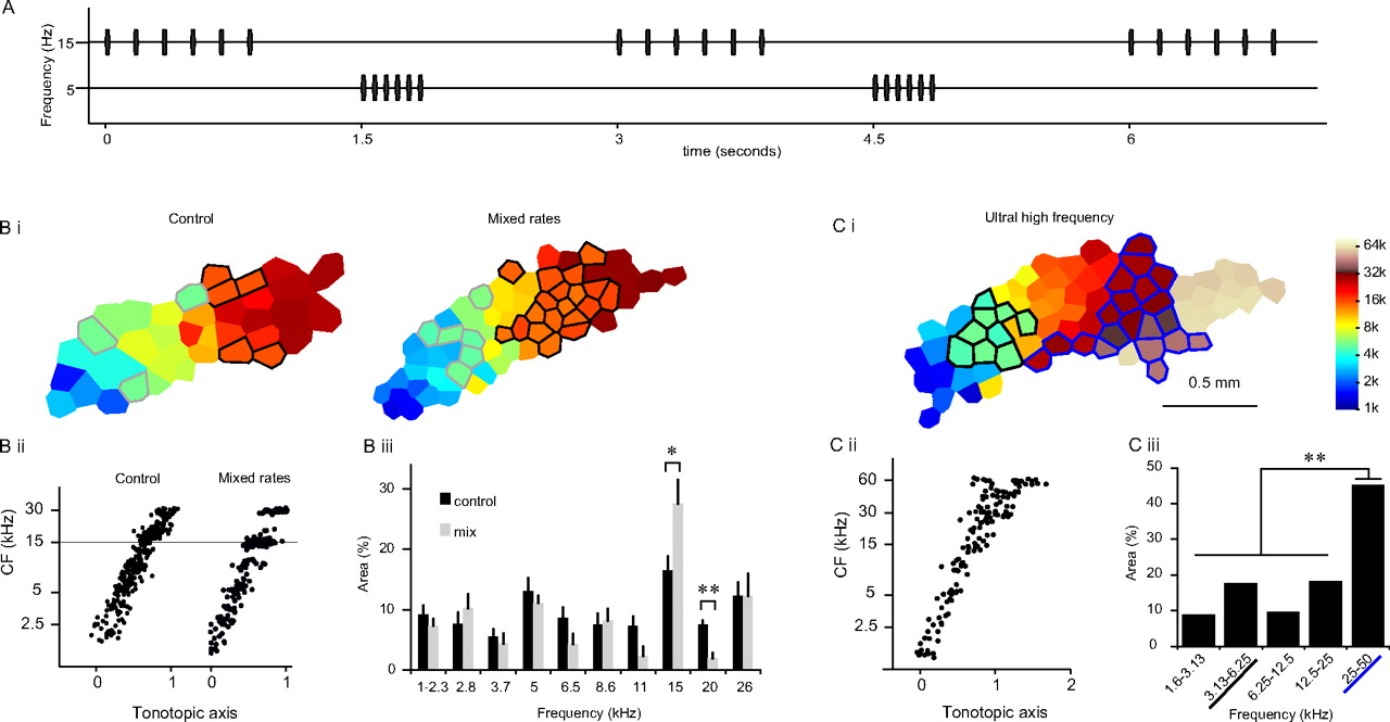 Selective Increase in Representations of Sounds Repeated at