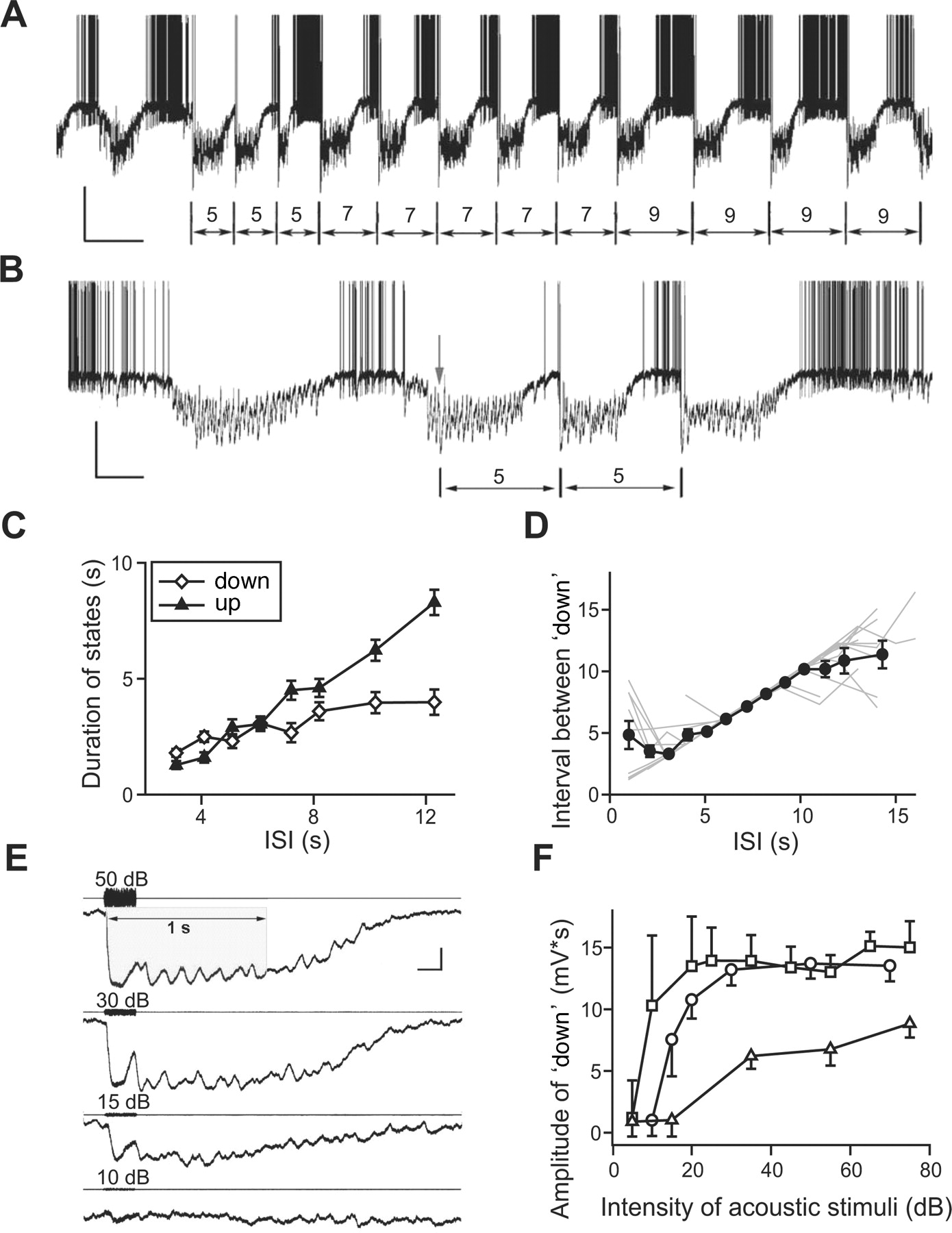 Entrainment of Slow Oscillations of Auditory Thalamic