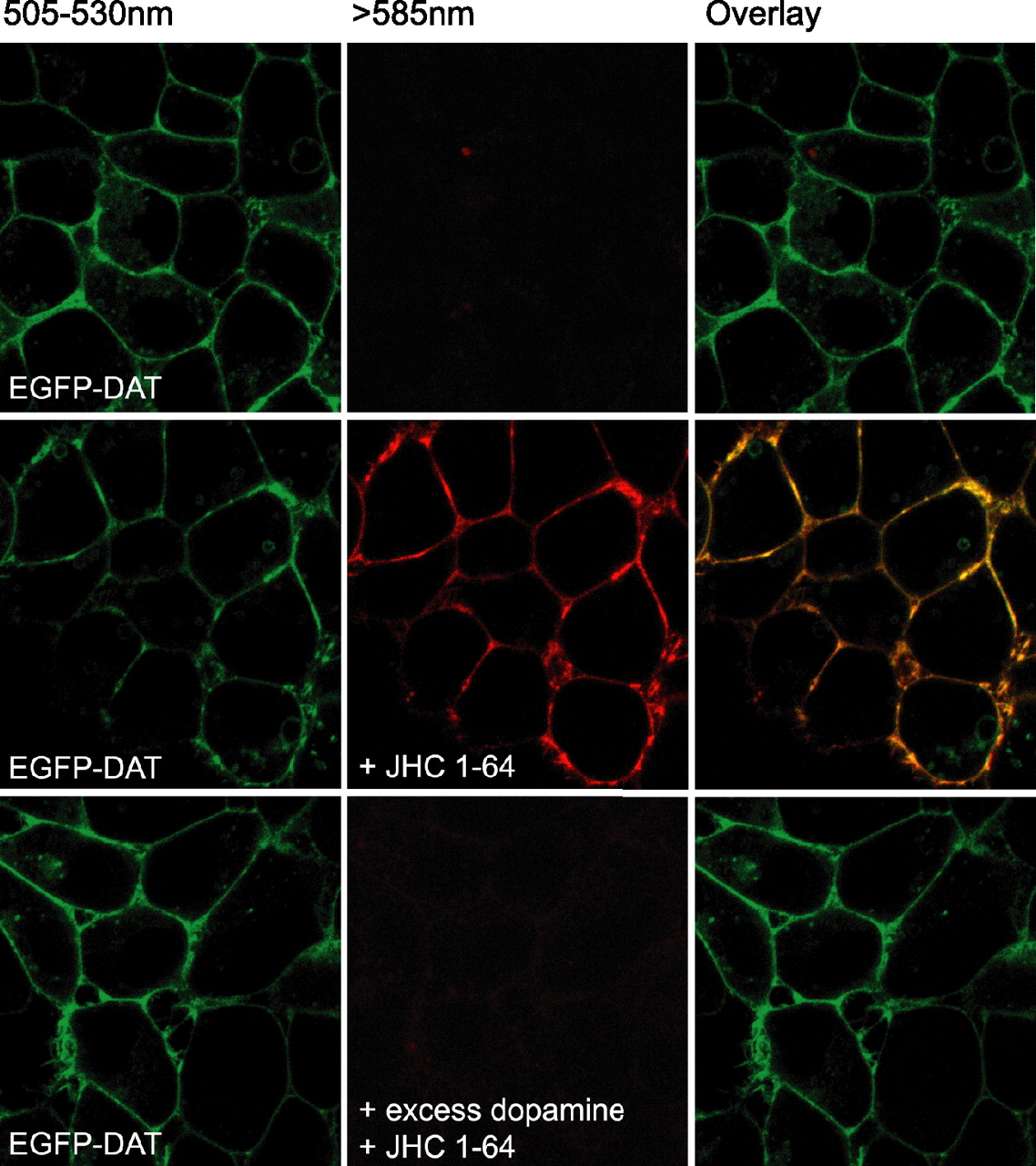 uniform excitation in epifluorescence
