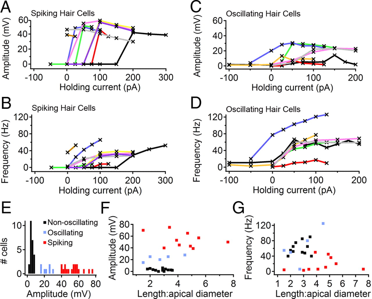 Spikes And Membrane Potential Oscillations In Hair Cells Generate Figure 2 10d Basic Armstrong Oscillator Circuit Download