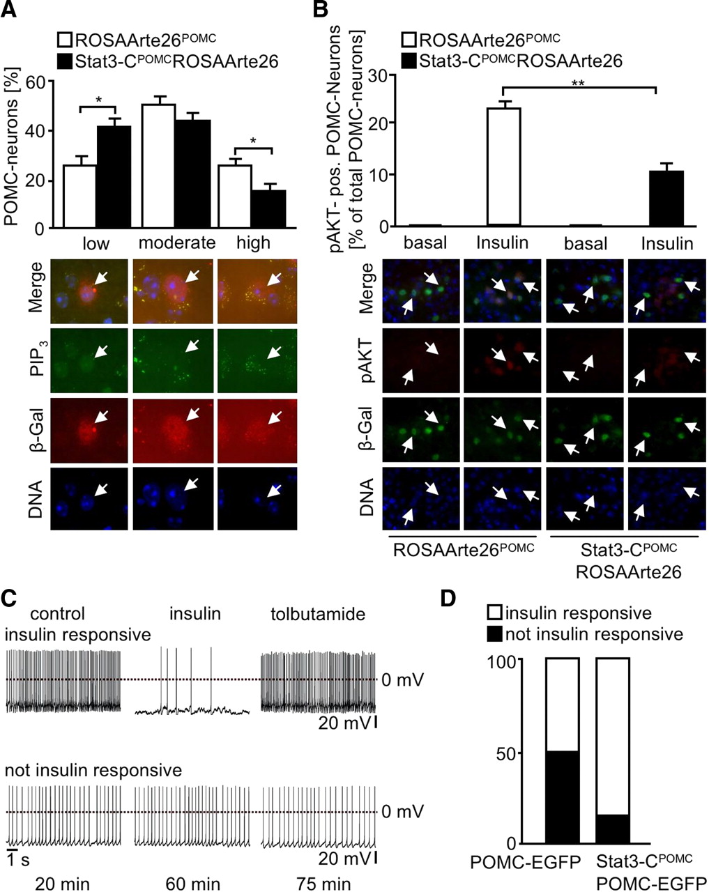 Enhanced Stat3 Activation in POMC Neurons Provokes Negative
