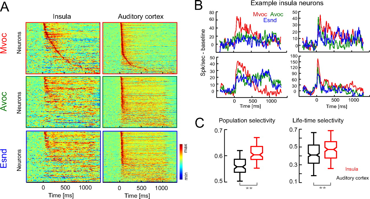 An Auditory Region In The Primate Insular Cortex Responding Door Ajar Alarm Circuit Tiny Guard With 555 Download Figure Open New Tab