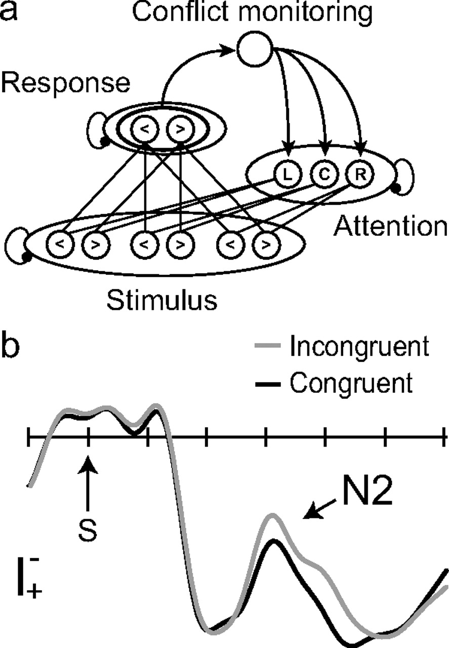 responding to congruent stimuli quicker than incongruent stimuli The impact of task rules on distracter processing: automatic categorization of faster than incongruent respond to incongruent than congruent stimuli.
