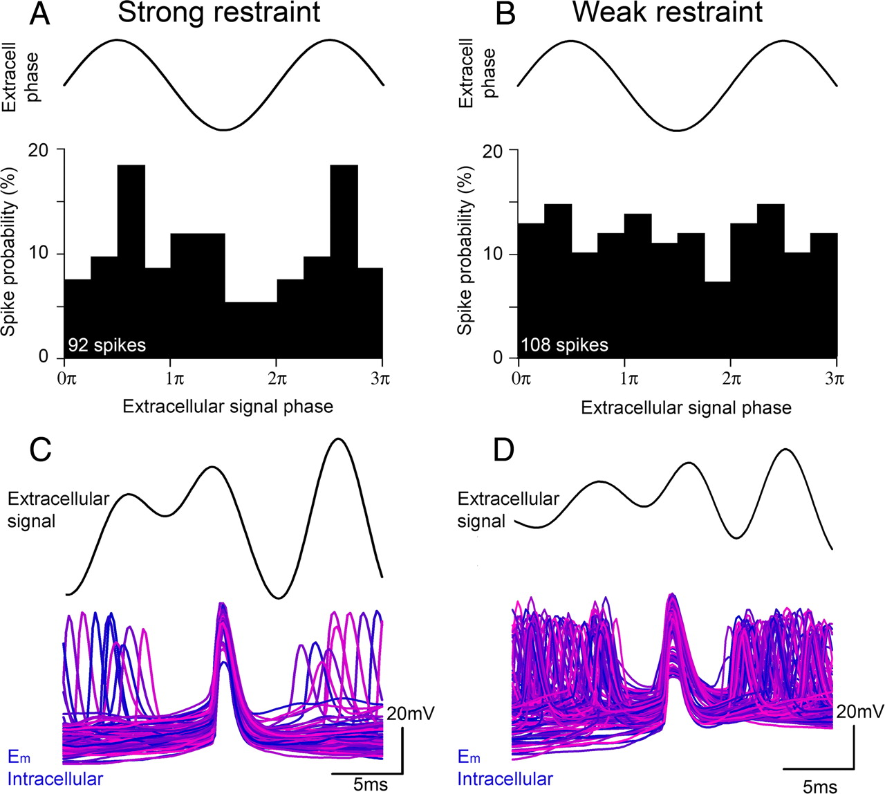 The Direct Relationship between Inhibitory Currents and