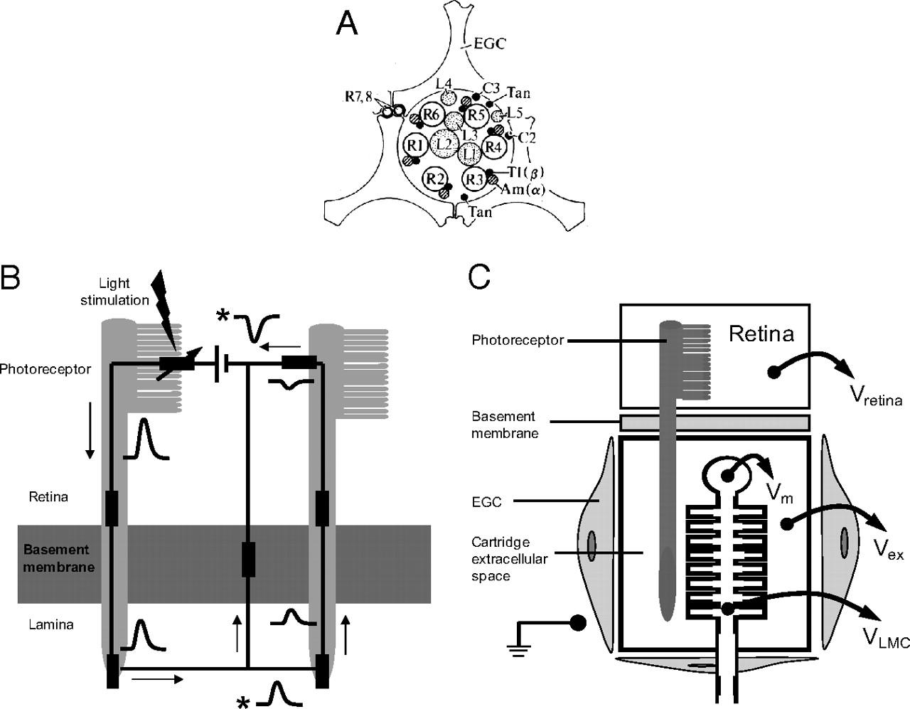 Tetrad Cartridge Wiring Diagram Empire Sonotone Audio Technica Diagrams Ribbon Filament