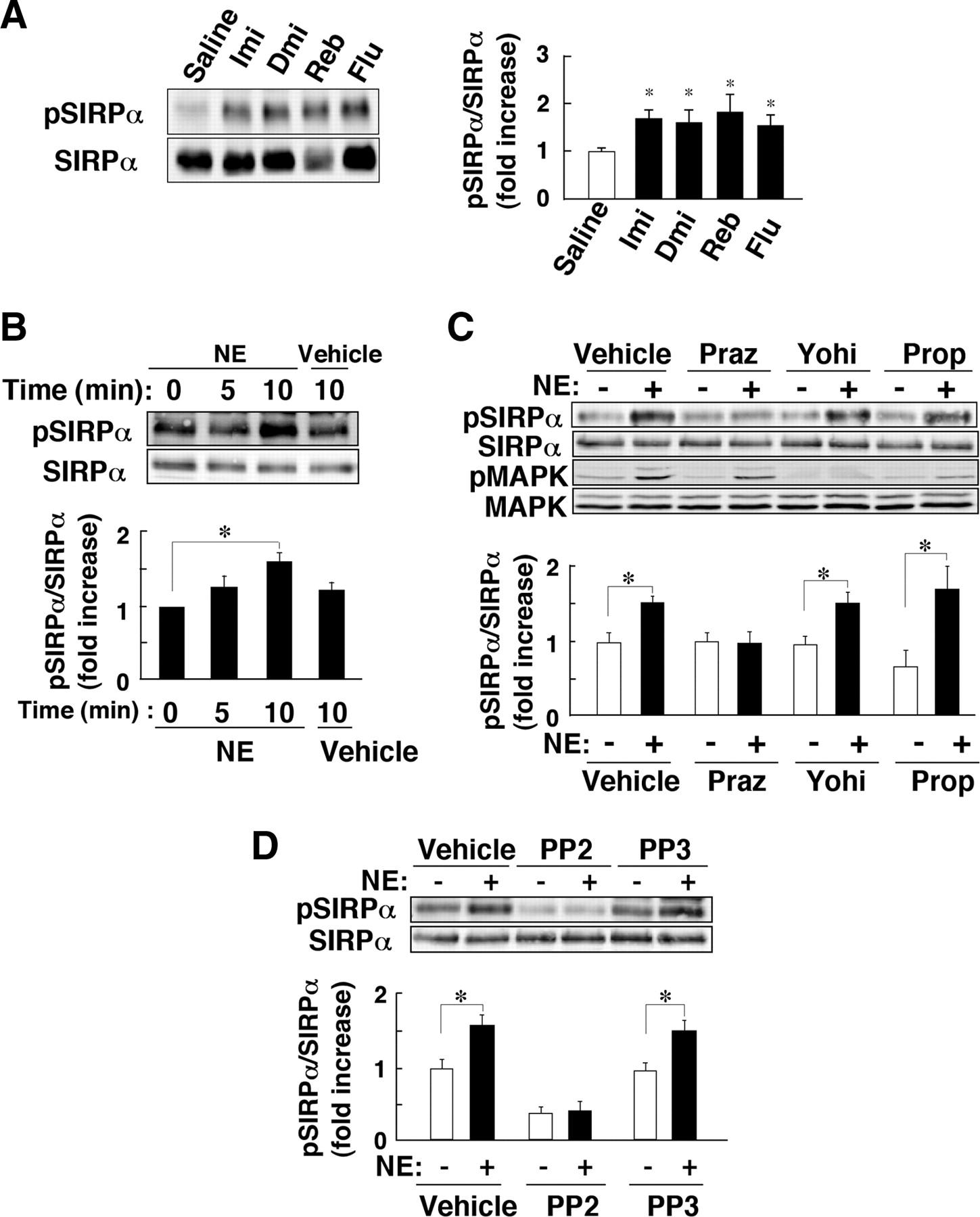Stress-Evoked Tyrosine Phosphorylation of Signal