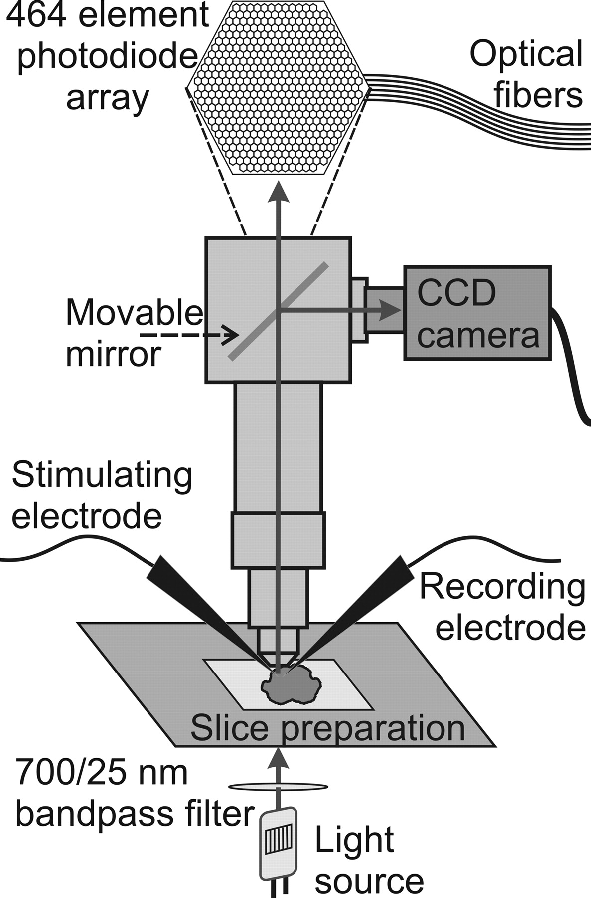 Intralaminar And Interlaminar Activity Within The Rodent Superior Mains High Low Voltage Cut Off Circuit Using Ic 324 Explained Download Figure