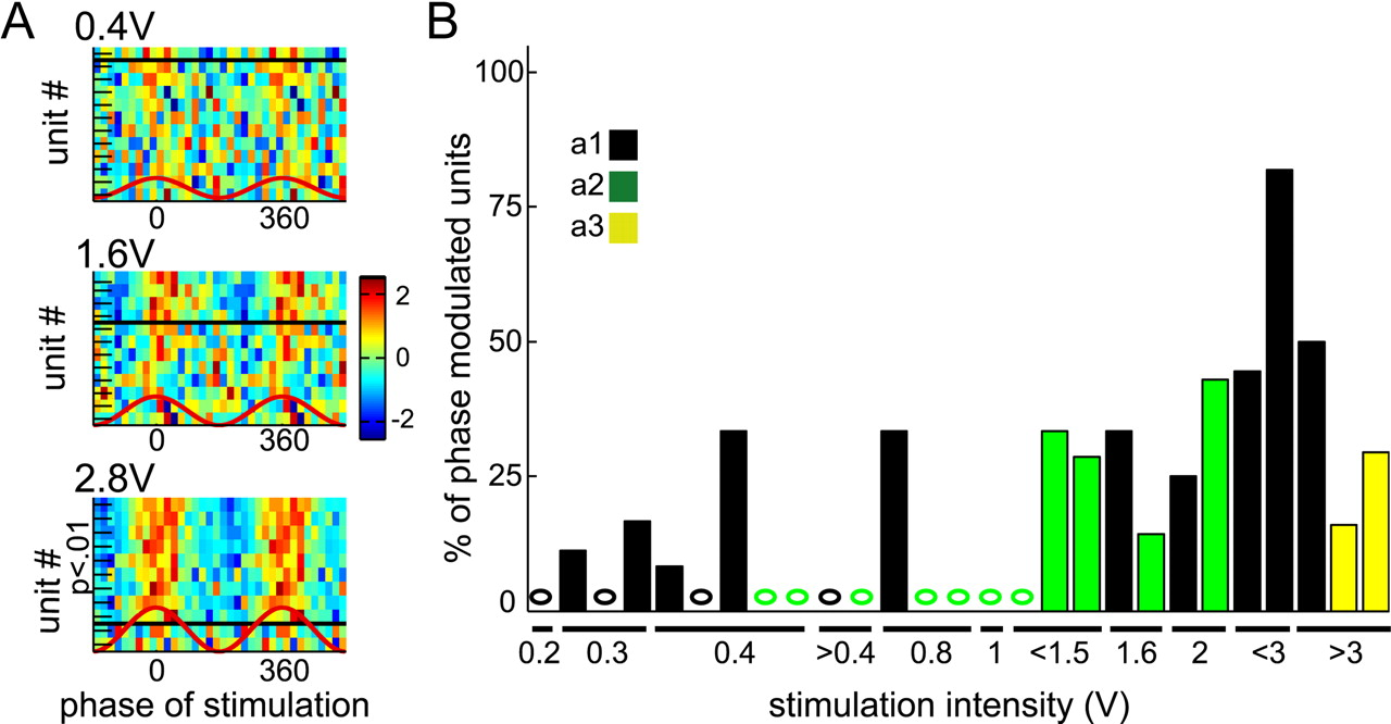 Transcranial Electric Stimulation Entrains Cortical Neuronal A G Scale Track Wiring Download Figure