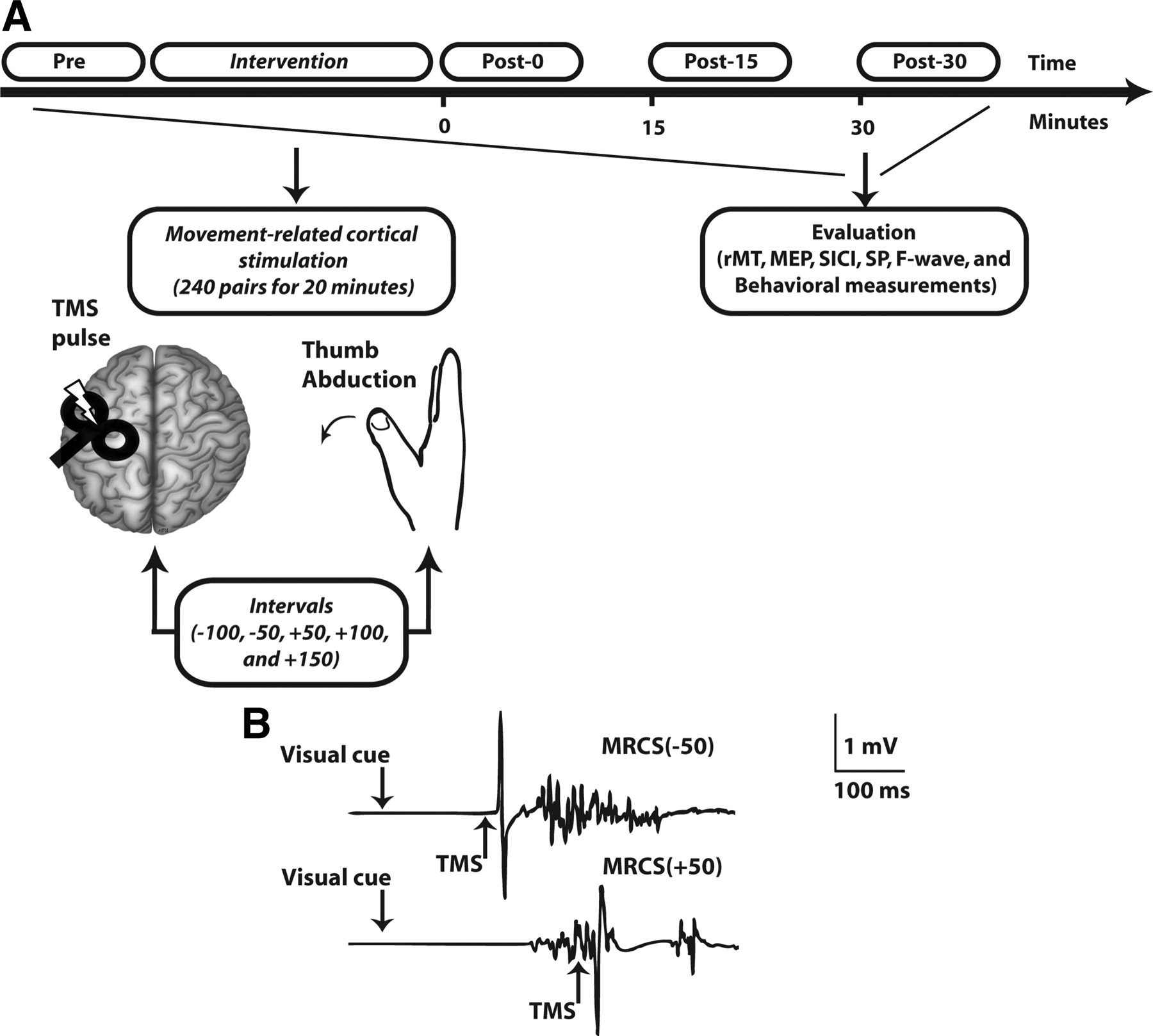 Movement Related Cortical Stimulation Can Induce Human Motor Circuits 8085 Projects Blog Archive Heart Rate Monitor Circuit Download Figure