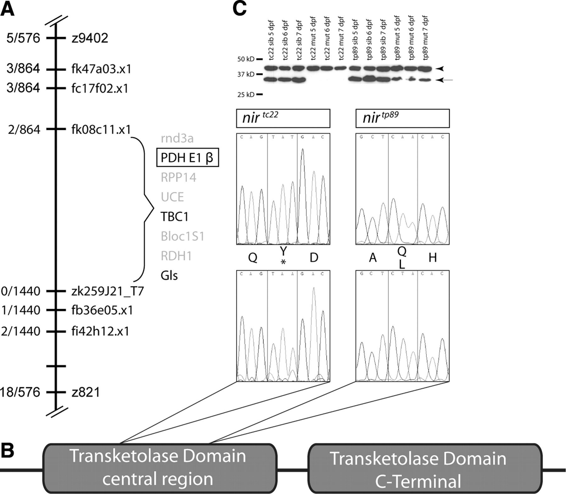 mutation summary visual in r