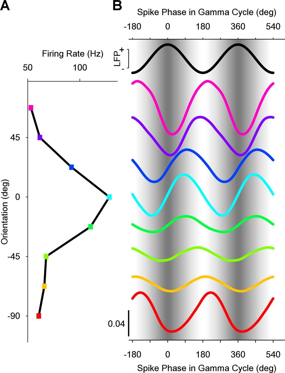 Gamma-Phase Shifting in Awake Monkey Visual Cortex | Journal