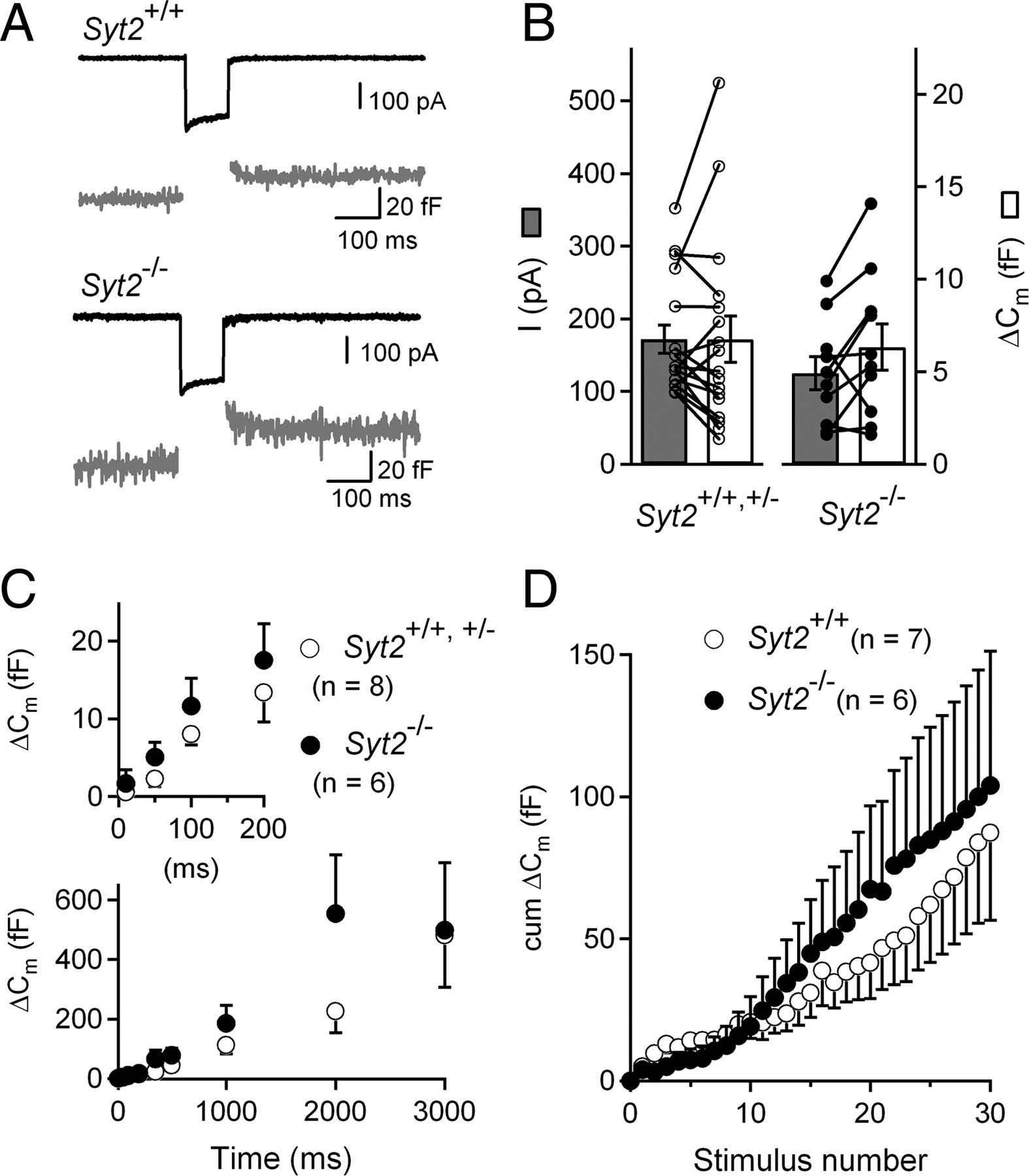 Control Of Exocytosis By Synaptotagmins And Otoferlin In Auditory