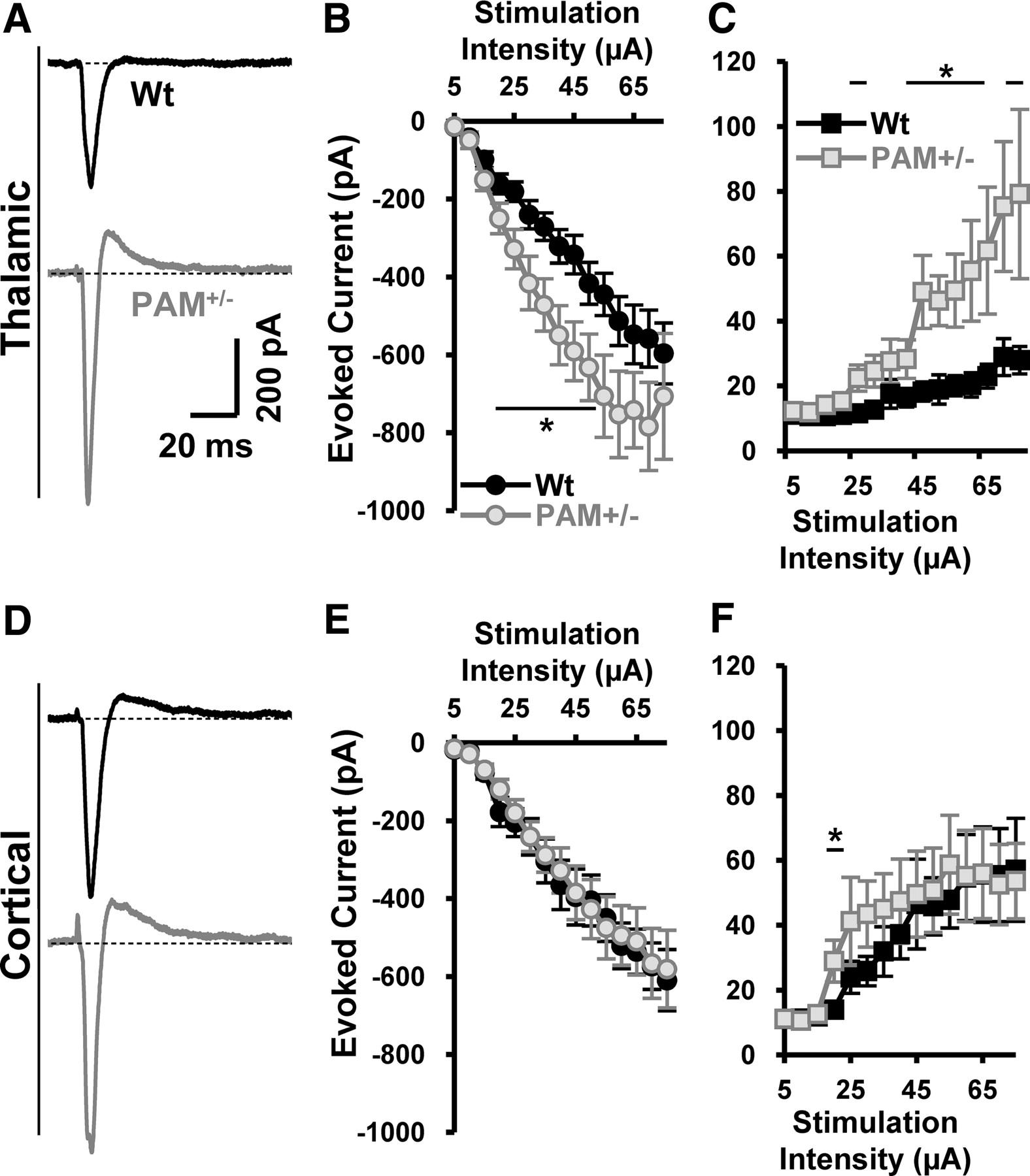 Peptidylglycine alpha amidating monooxygenase supplements