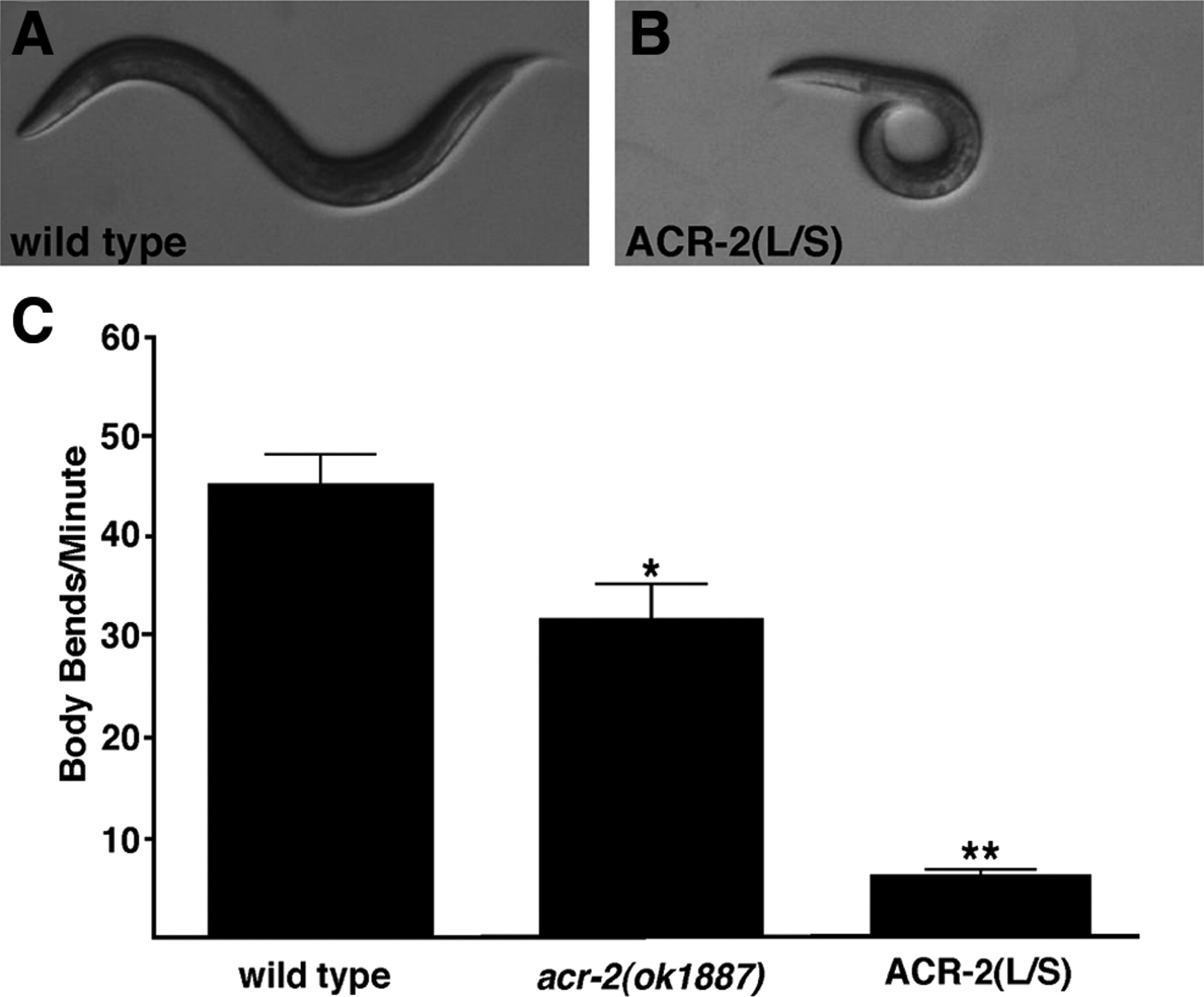 A Dominant Mutation in a Neuronal Acetylcholine Receptor Subunit