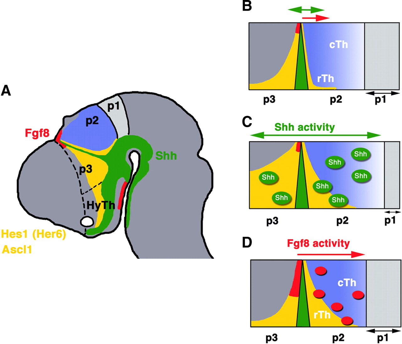 The Anatomical Substrate for Telencephalic Function