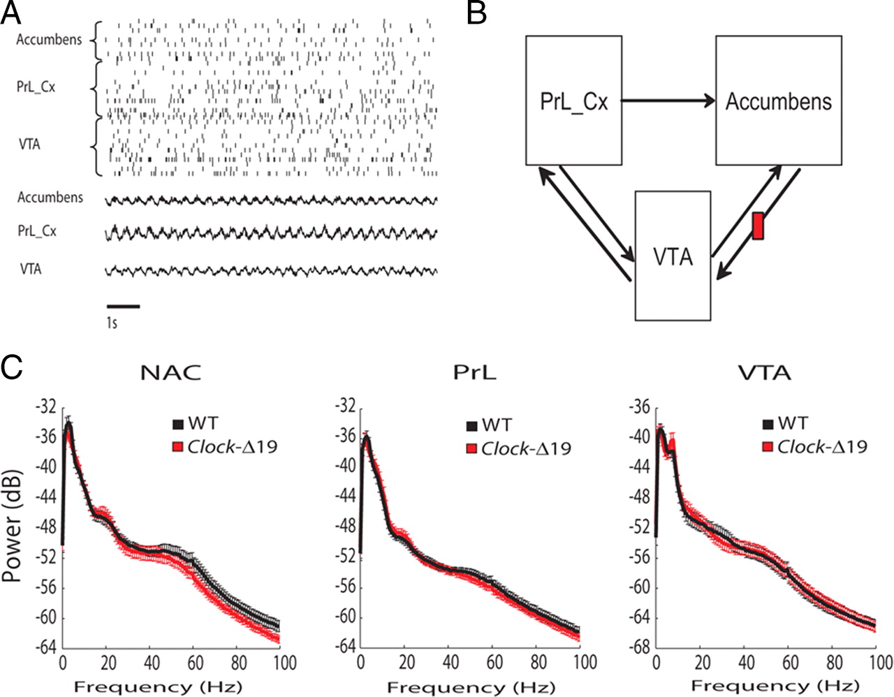 Lithium ameliorates nucleus accumbens phase signaling dysfunction download figure pooptronica