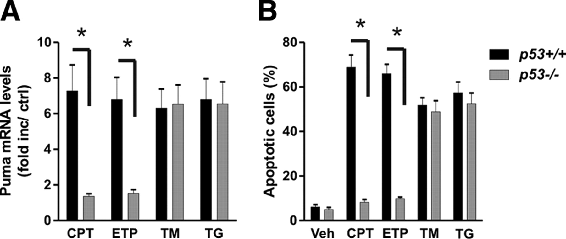 neuronal apoptosis induced by endoplasmic reticulum stress is regulated by atf4 u2013chop