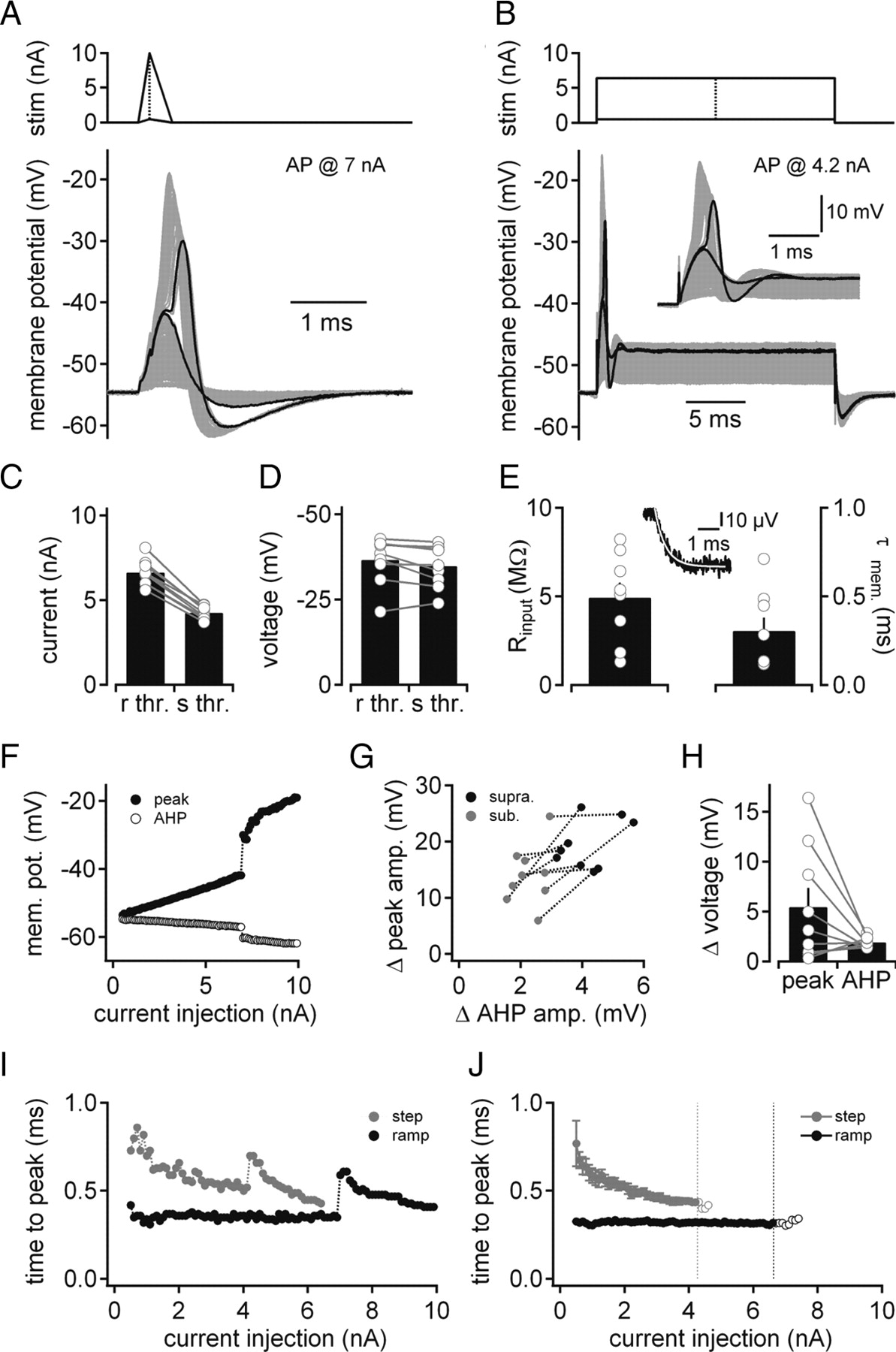 medial superior olivary neurons receive surprisingly few excitatory and inhibitory inputs with