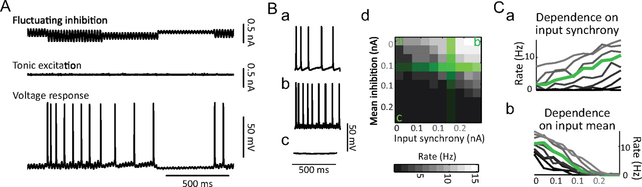 Cell Type-Specific Control of Neuronal Responsiveness by