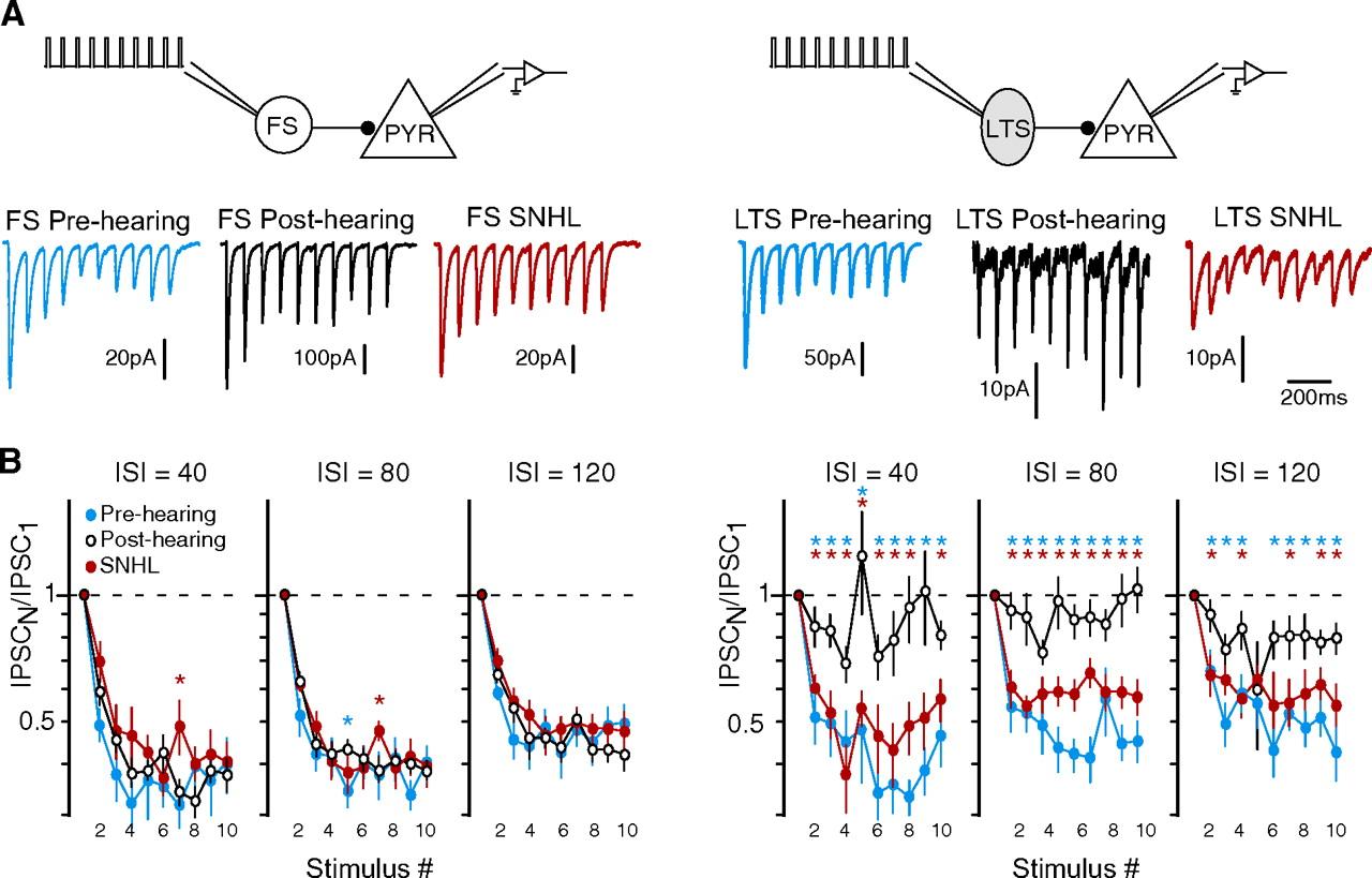 Presynaptic GABAB Receptors Regulate Experience-Dependent