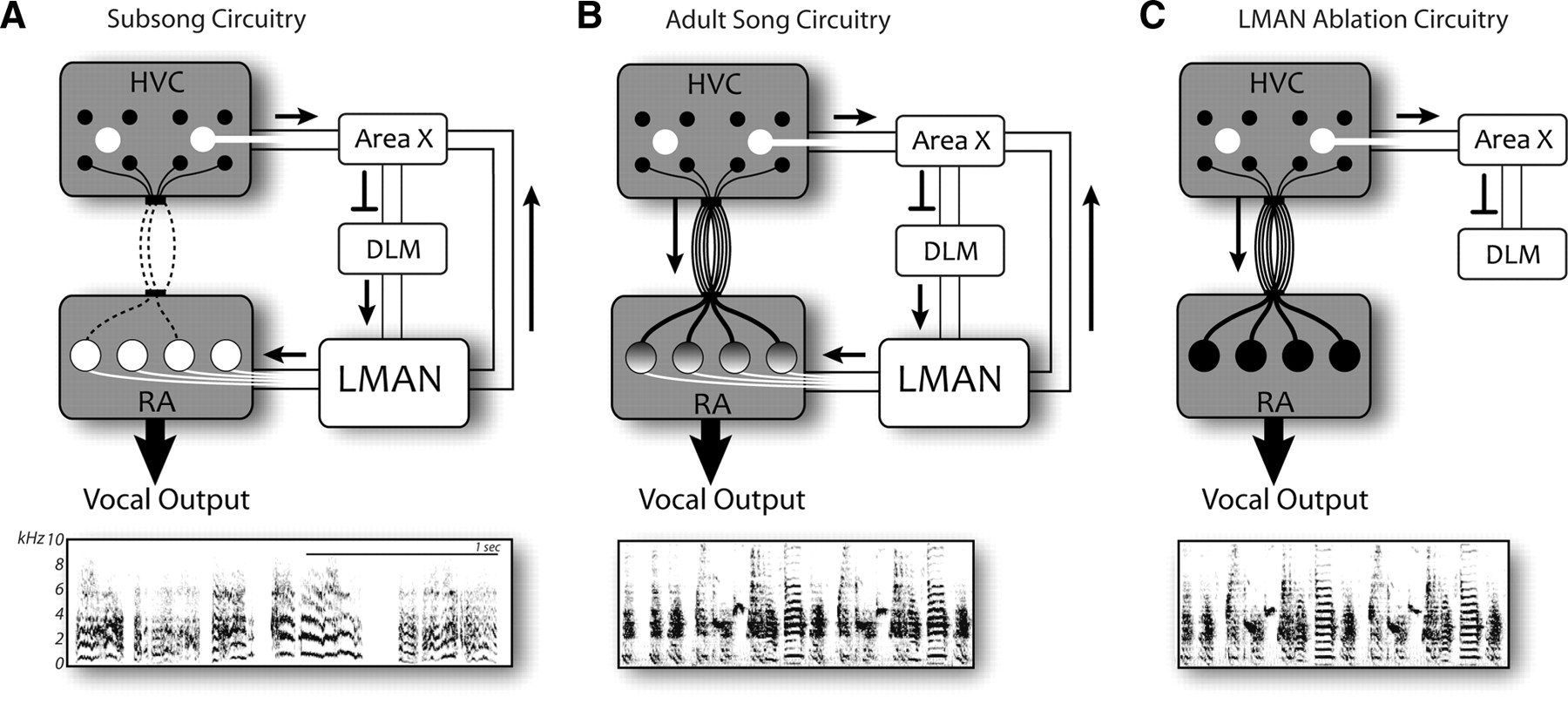 Dual Pre-Motor Contribution to Songbird Syllable Variation | Journal ...