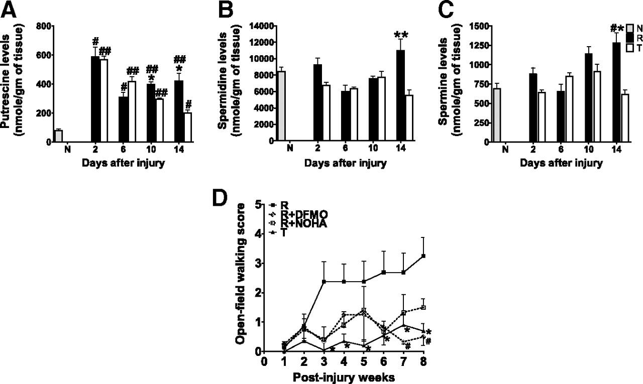 Acid fibroblast growth factor and peripheral nerve grafts regulate download figure falaconquin