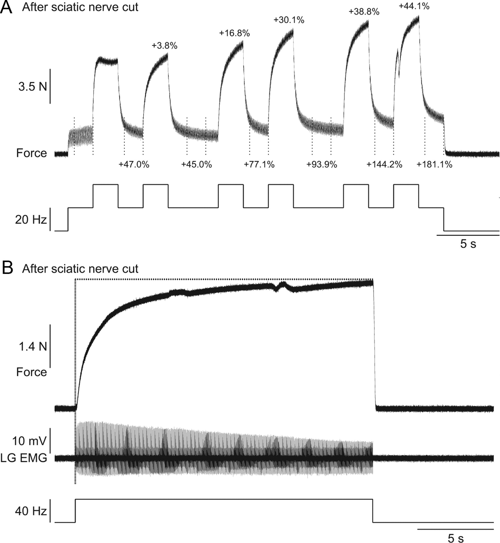 Extra Forces Evoked During Electrical Stimulation Of The Muscle Or Cat Skeleton Moreover Knee Muscles And Tendons Diagram In Addition Download Figure