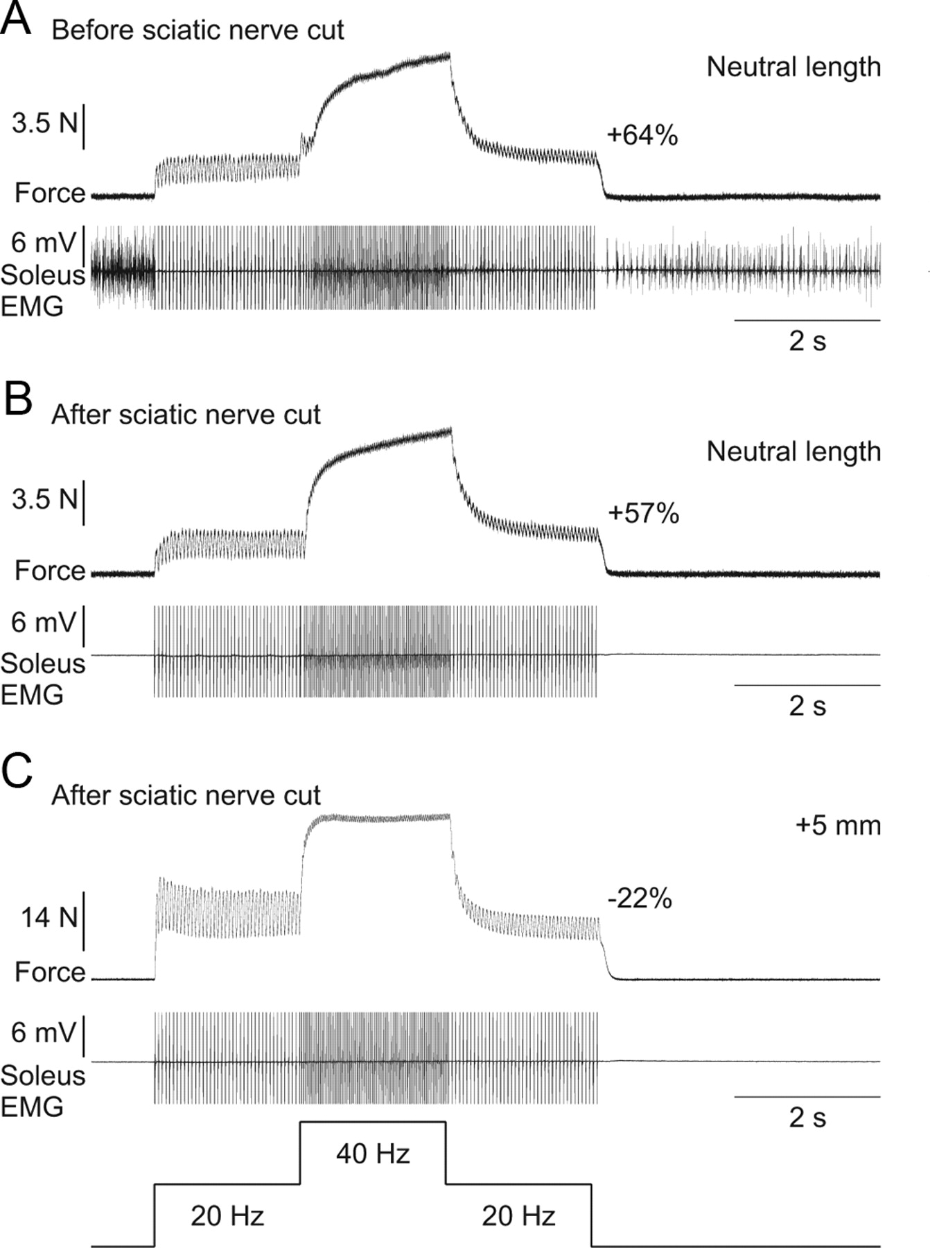 Extra Forces Evoked During Electrical Stimulation Of The Muscle Or 64 Et Wiring Diagram Download Figure