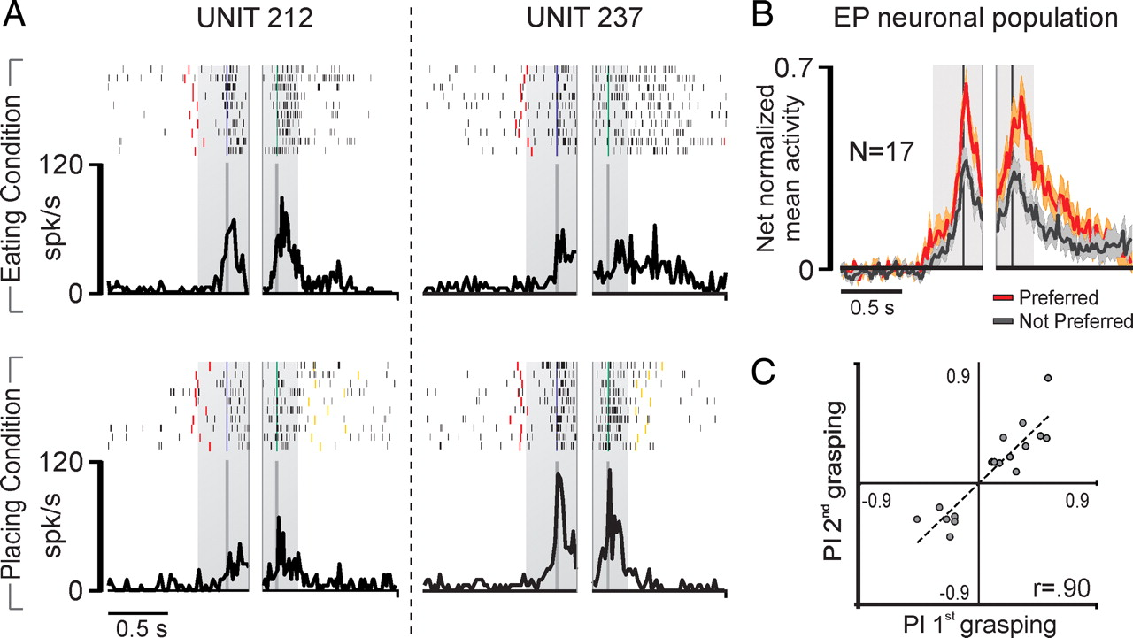 Grasping Neurons of Monkey Parietal and Premotor Cortices Encode