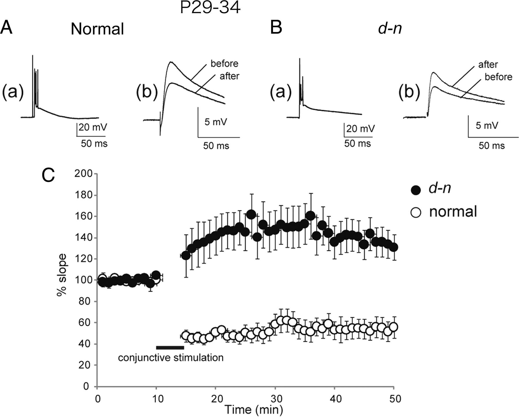 A Role for Myosin Va in Cerebellar Plasticity and Motor Learning: A
