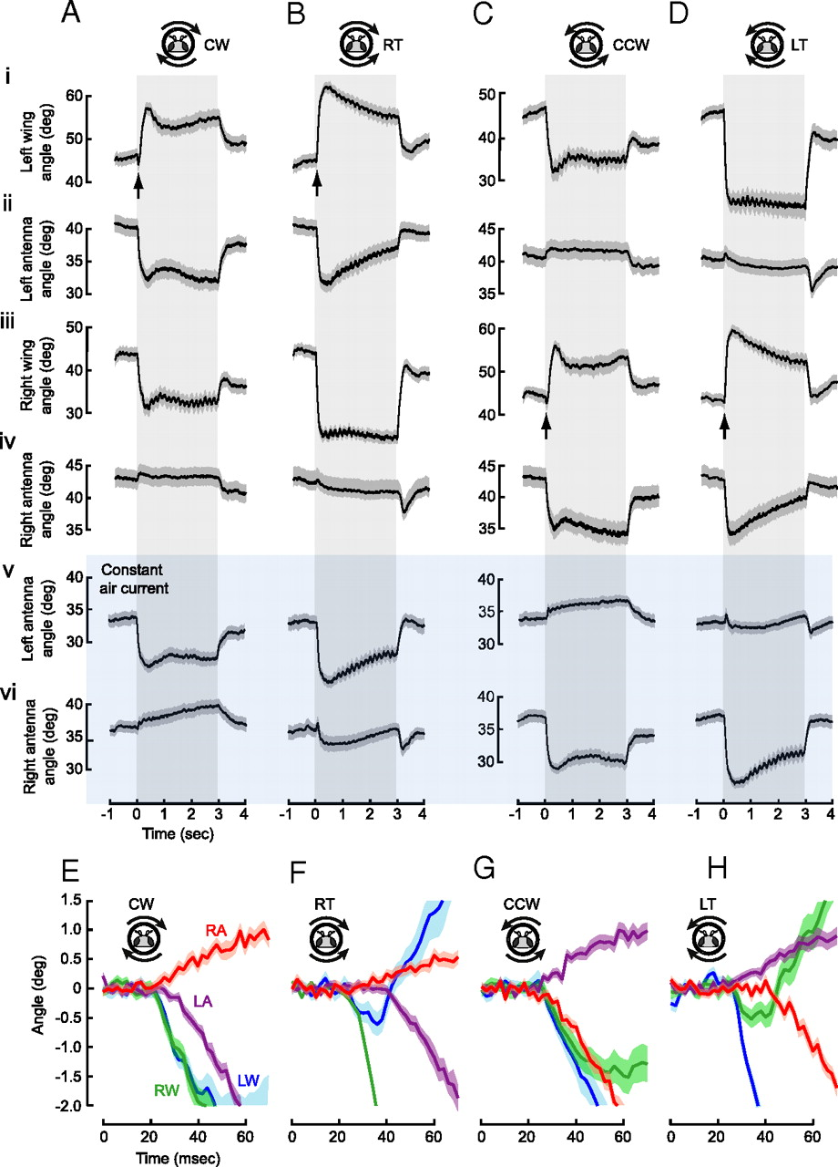 Active and Passive Antennal Movements during Visually Guided ...