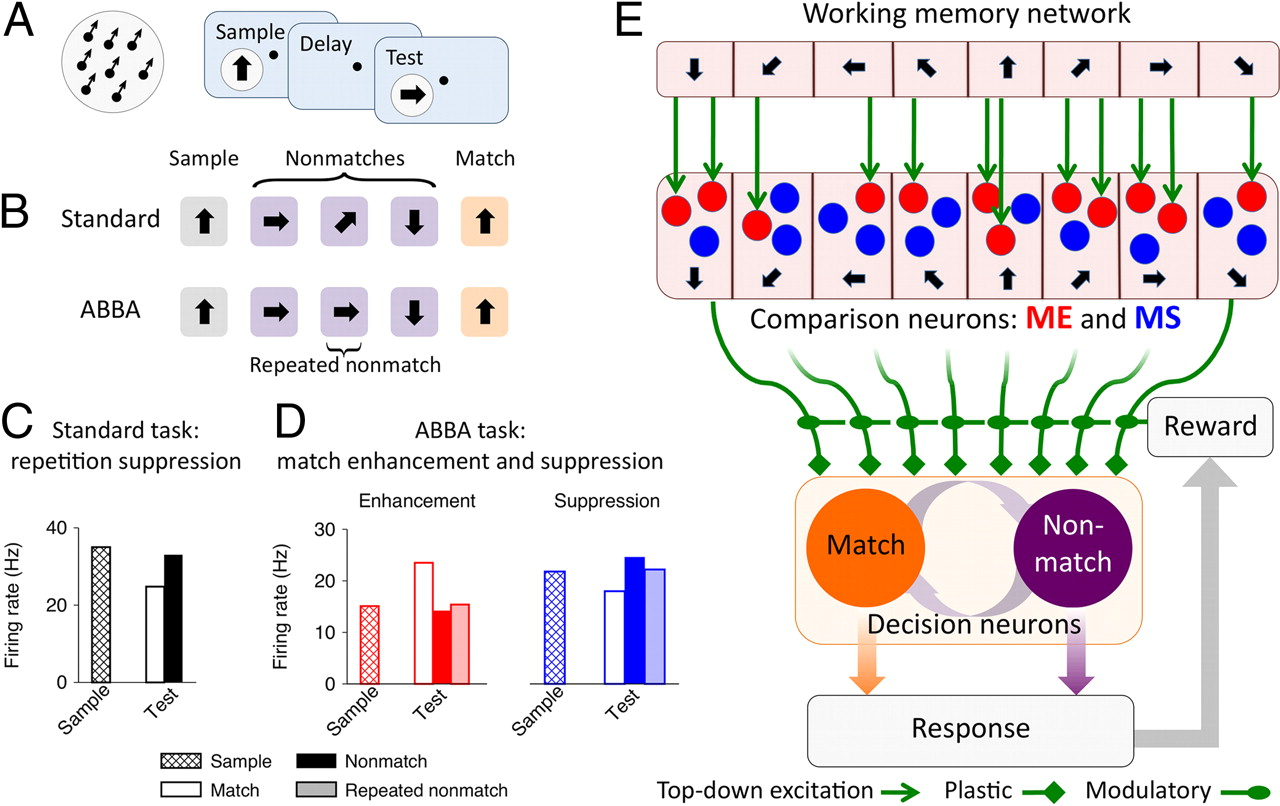 Same Or Different A Neural Circuit Mechanism Of Similarity Based Series Circuits Whereby Components Share The Current Download Figure Open In New Tab