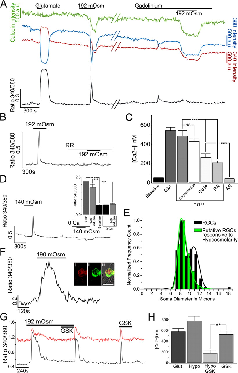 The Polymodal Ion Channel Transient Receptor Potential