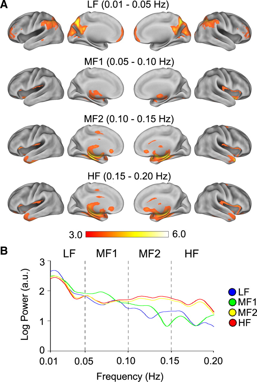 Anatomical and Functional Assemblies of Brain BOLD Oscillations
