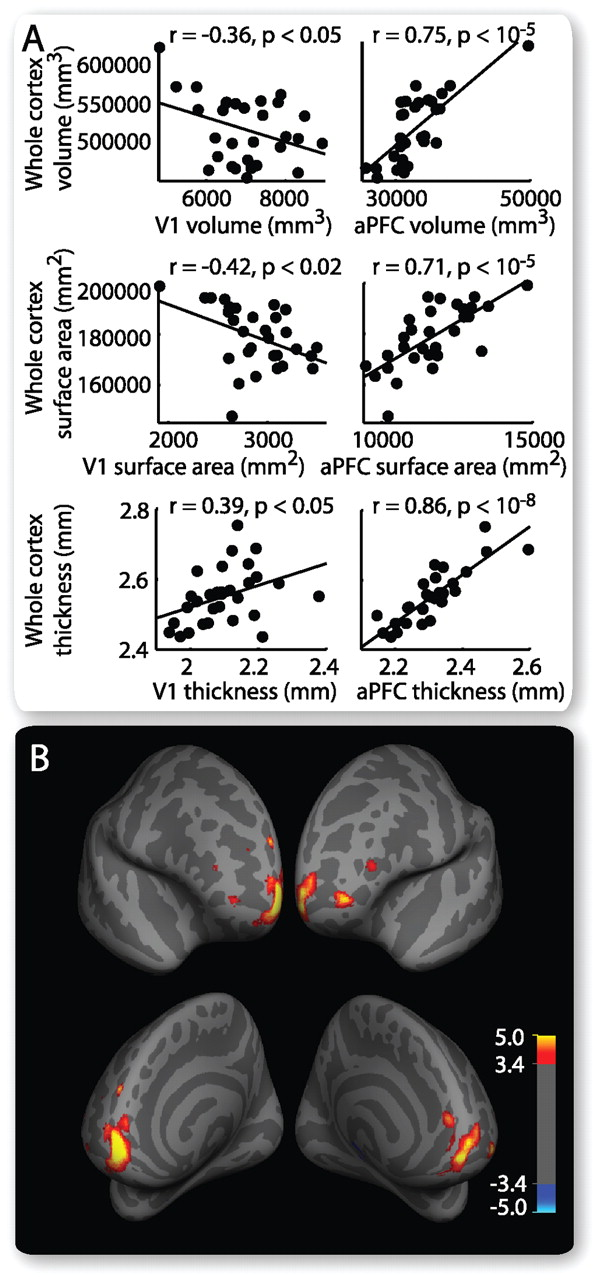Reciprocal Anatomical Relationship between Primary Sensory and ...