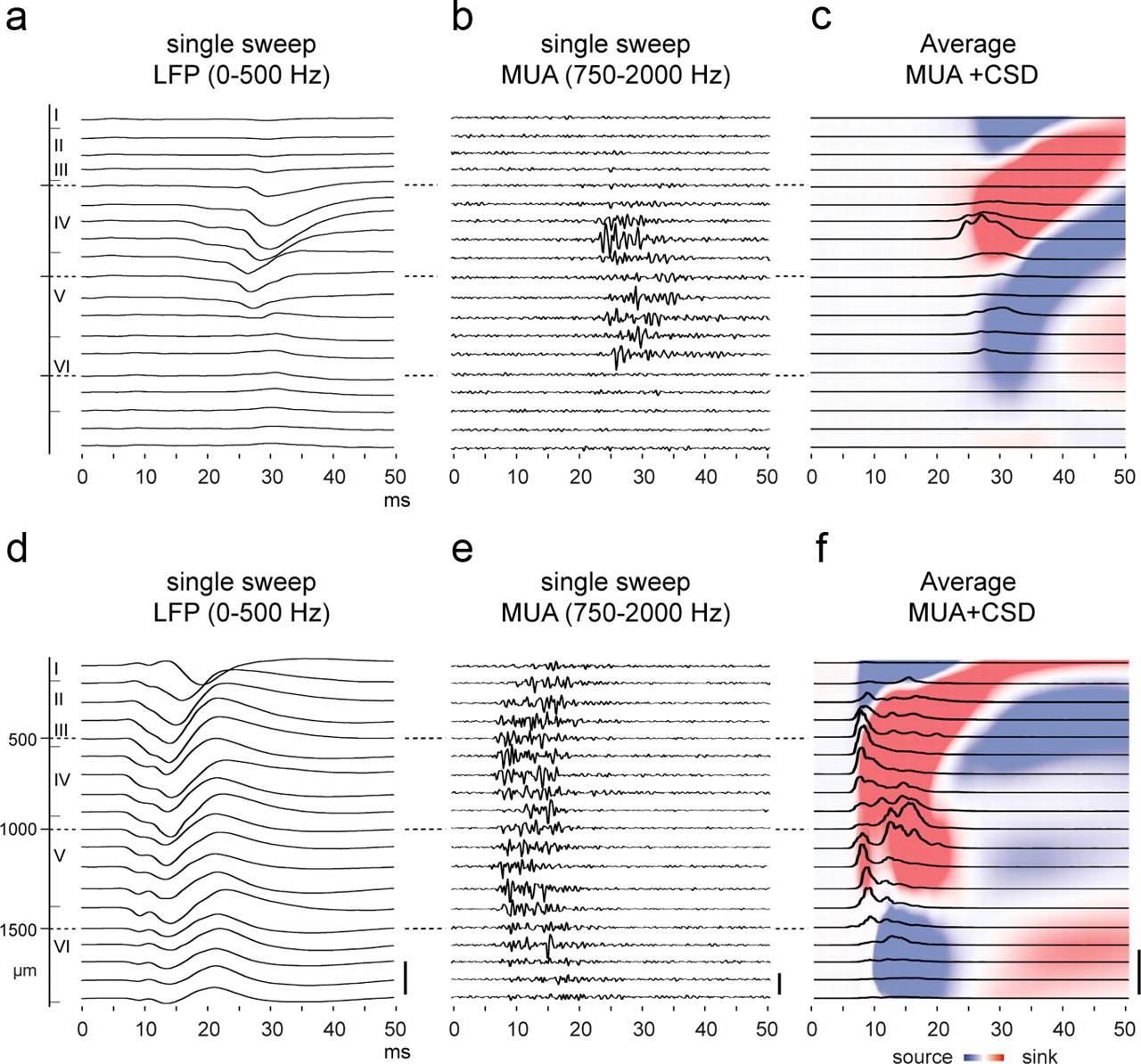 Functional development of large scale sensorimotor cortical networks download figure malvernweather Images