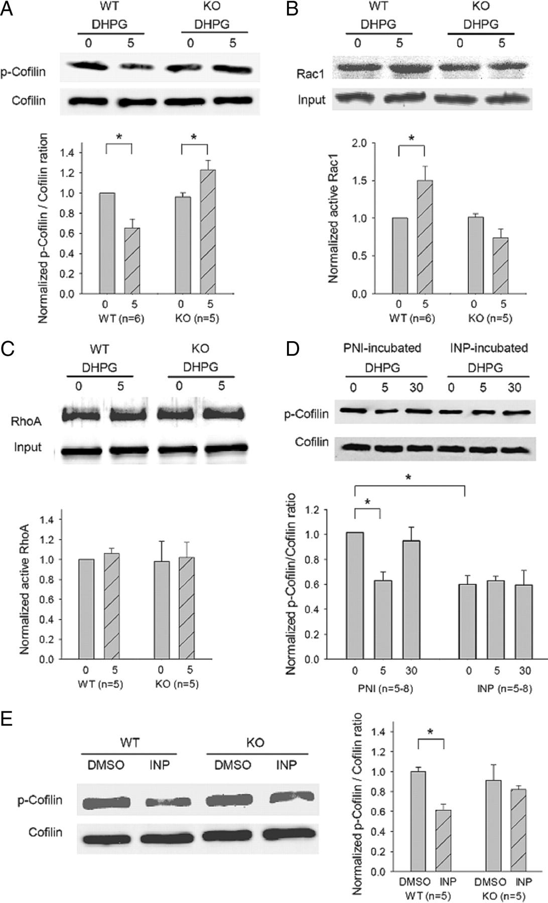 GluA2 (GluR2) Regulates Metabotropic Glutamate Receptor