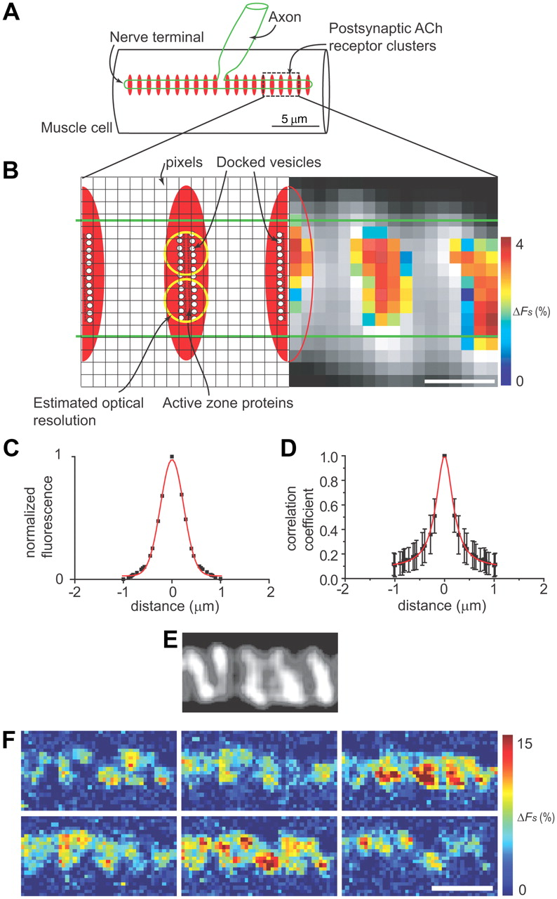 Single-Pixel Optical Fluctuation Analysis of Calcium Channel