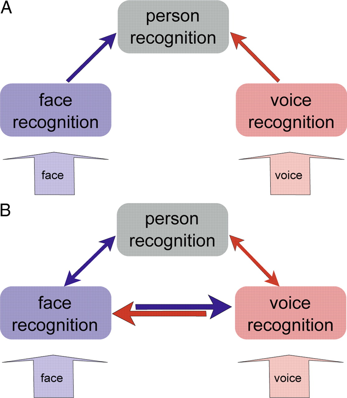 Direct Structural Connections Between Voice And Face Recognition Block Diagram Of Speech Procedures Download Figure
