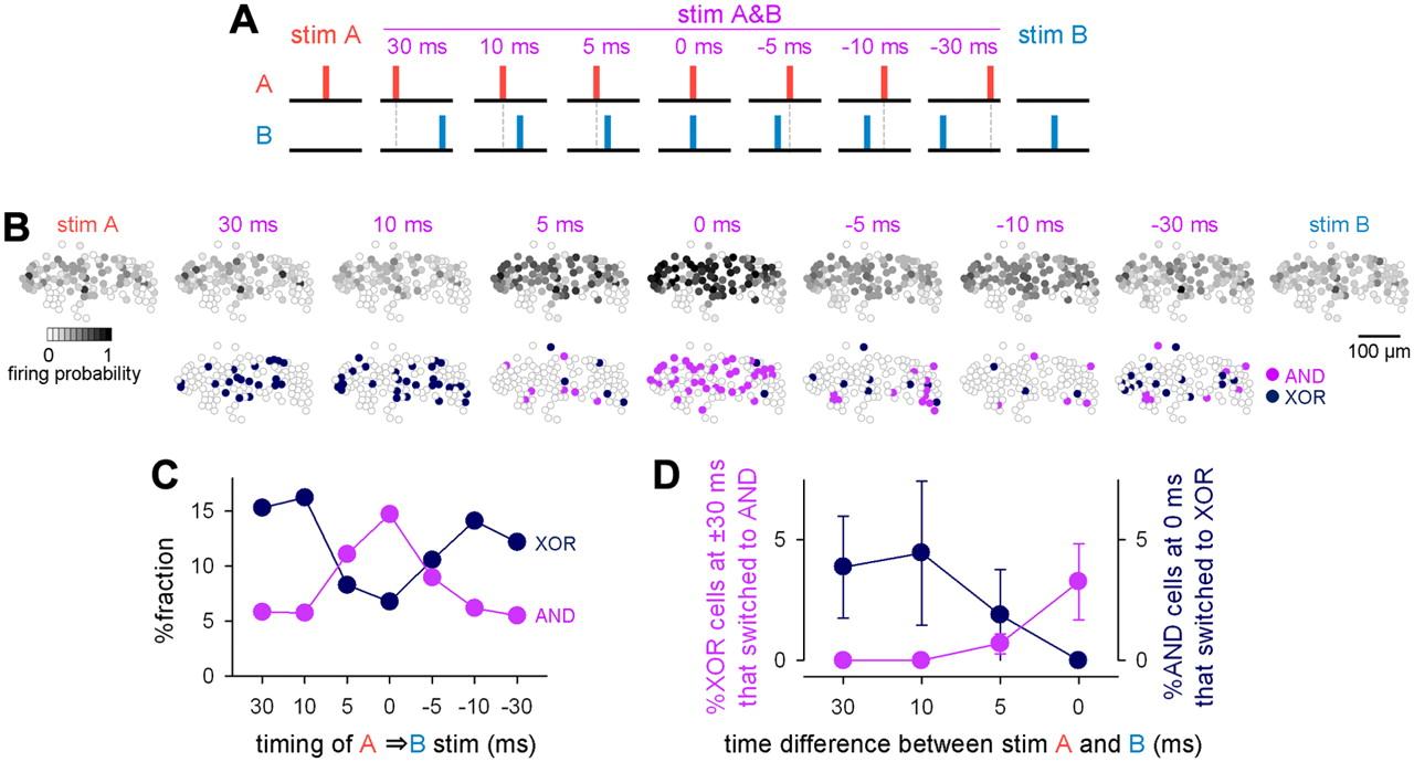 Hippocampal Polysynaptic Computation   Journal of Neuroscience
