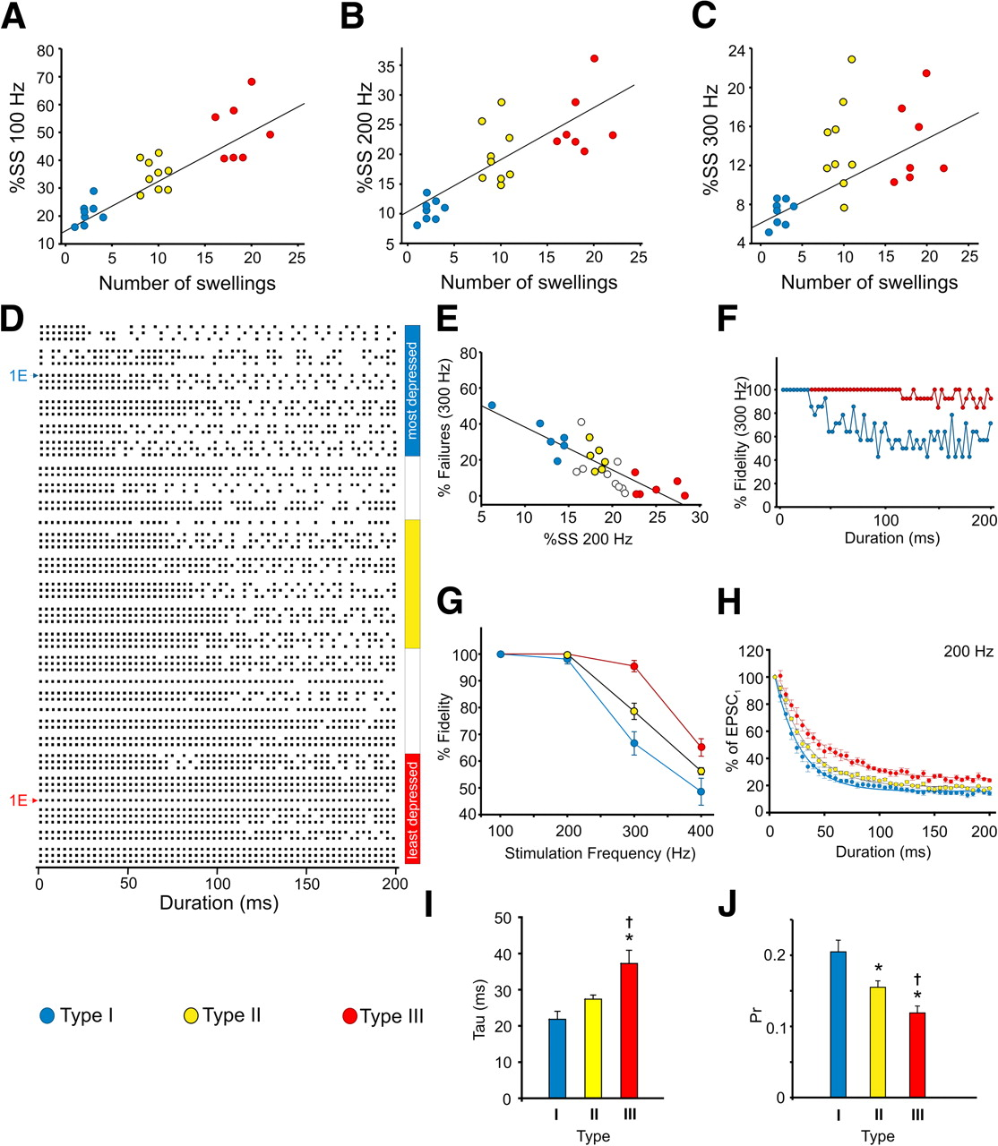 Morphological and functional continuum underlying heterogeneity in.
